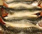 Риба плакия 4