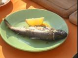 Царска риба 3
