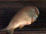 Риба по чорбаджийски 2