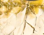 Баклава с орехи и шамфъстъци 6