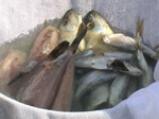 Българевска рибарска чорба 2