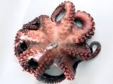 Октопод (варене и почистване)